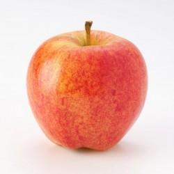 BIO - Pommes Gala