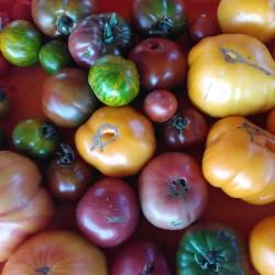 Tomates anciennes mixtes - 1kg