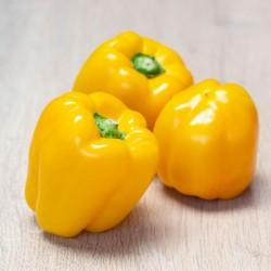 BIO - Poivron jaune