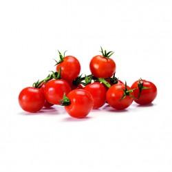 BIO - Tomates cerises
