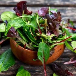 Mesclun - salade mêlée