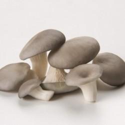 Champignons Pleurote grise...