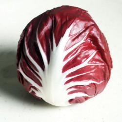 Chicorée rouge - Trévisse...