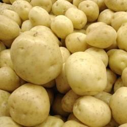 BIO - Agria - Pommes de...